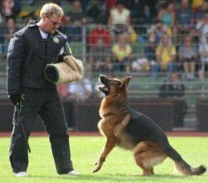 ses tonunun köpekler üzerinde etkisi