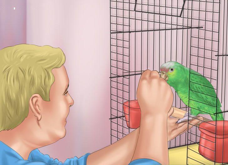 Papağana güven vermek