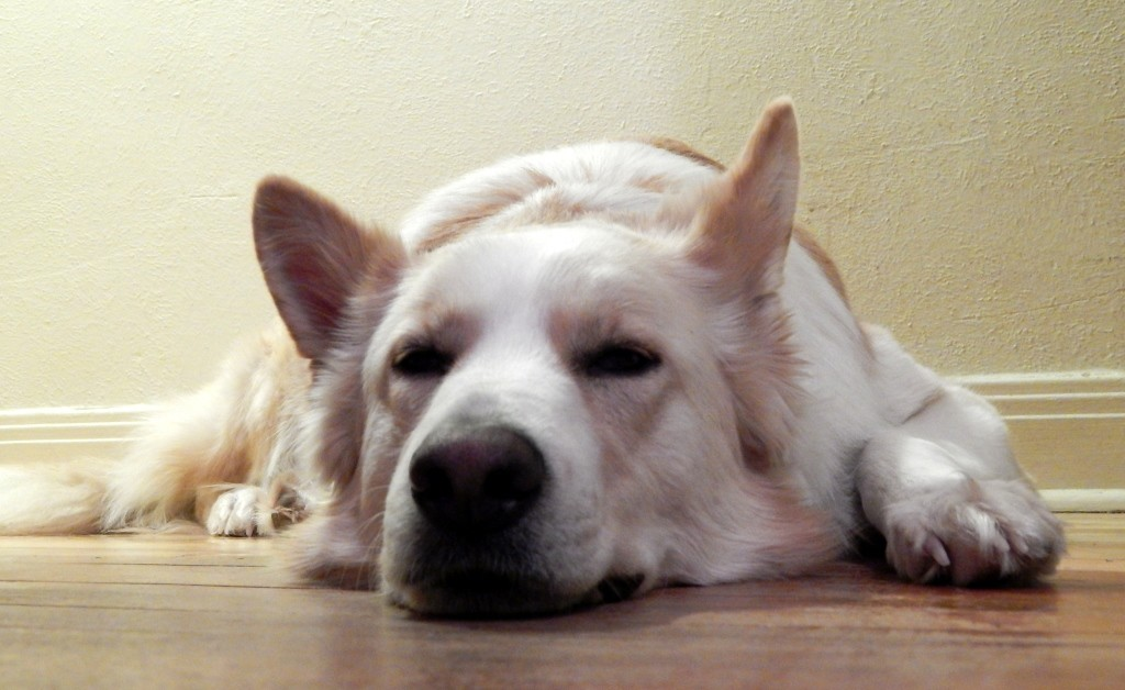 köpek tedavisi nasıl yapılmalı