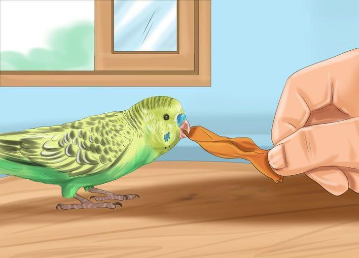 muhabbet kuşu alıştırma yolları