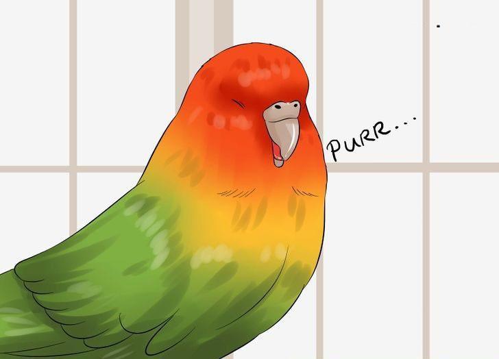 muhabbet kuşu sersemliği