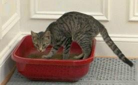 kedi kumu için, kullanıcağınız çöp kutusu