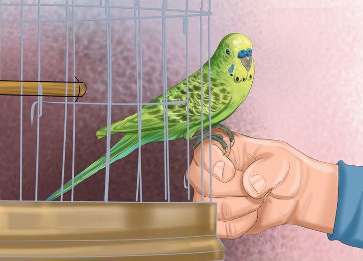 рисунок попугаев как живые эндшпиле роль пешек