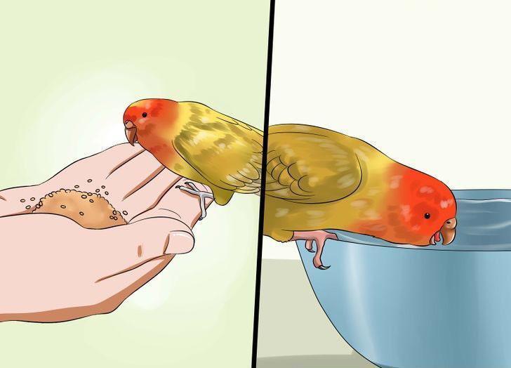 muhabbet kuşu için zararlı olan şeyler