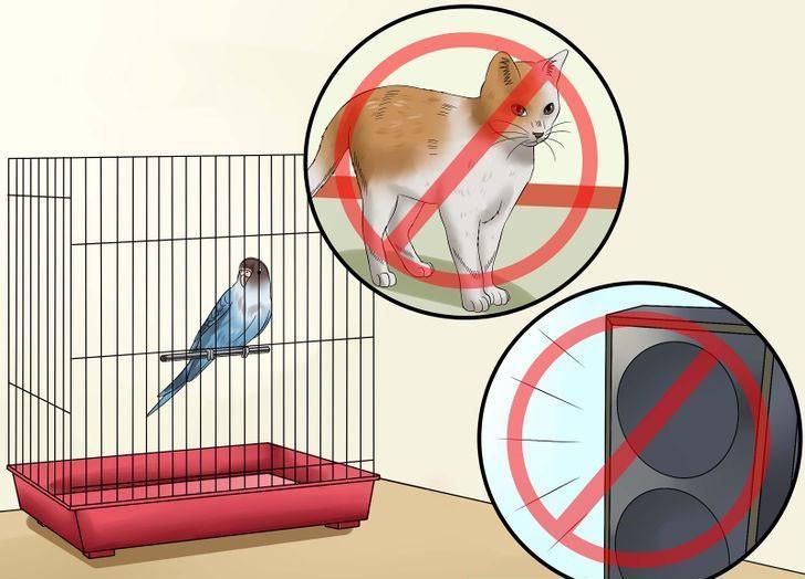 muhabbet kuşu kafes düzeni nasıl olmalı