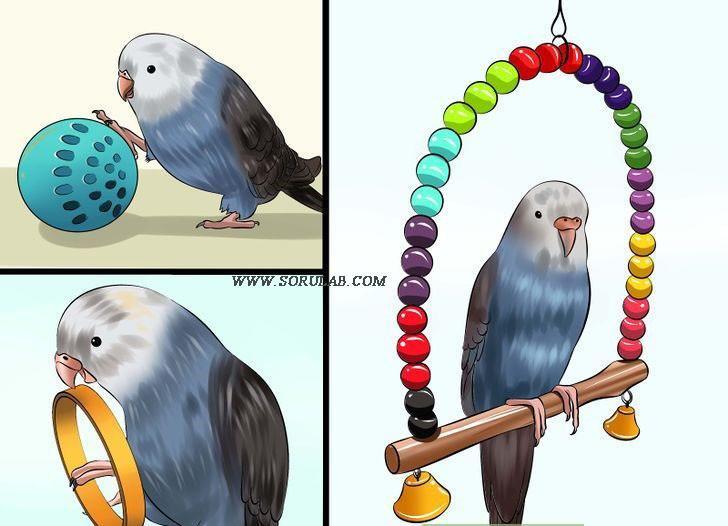 muhabbet kuşu oyuncakları
