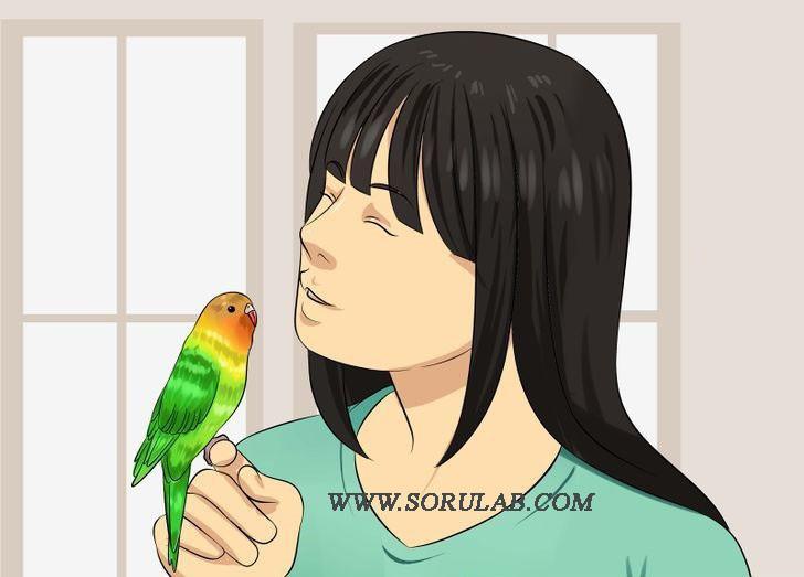 muhabbet kuşu sevgi gösterisi