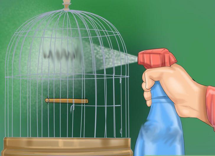 Muhabbet kuşu kafesi temizliği nasıl yapılır