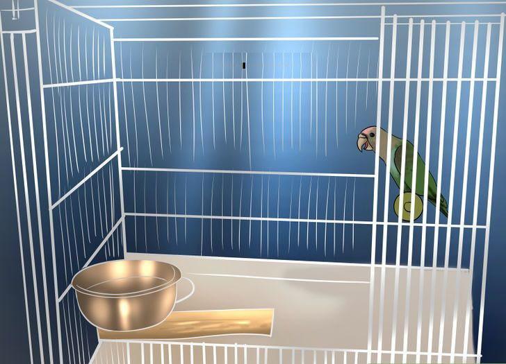 papağan kafesi