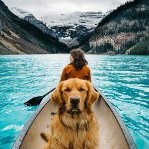 Köpek nasıl sosyalleştirilir