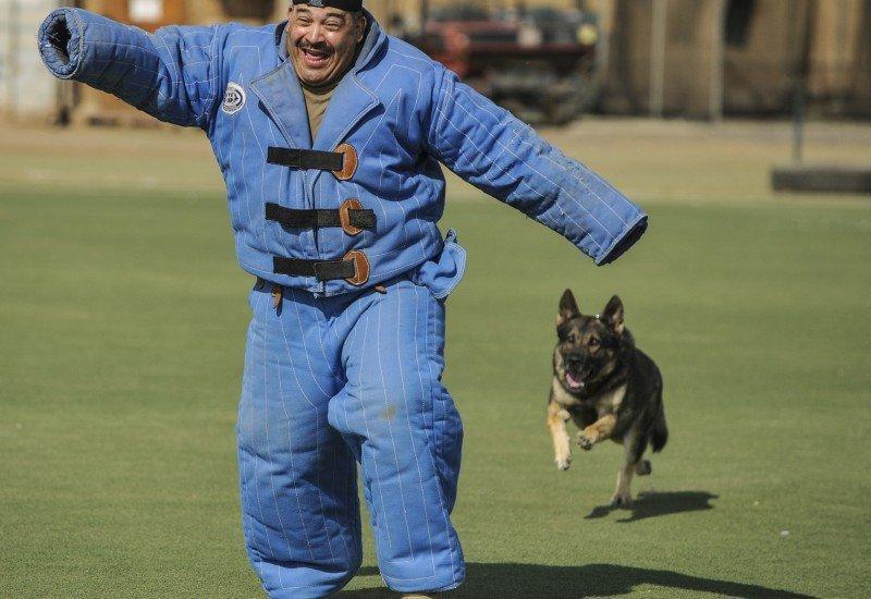köpek eğitimi hakkında bilgi