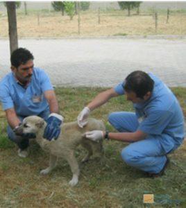 doğal köpek tedavisi nasıl yapılır