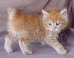yavru kedi bakımı nasıl yapılmalı