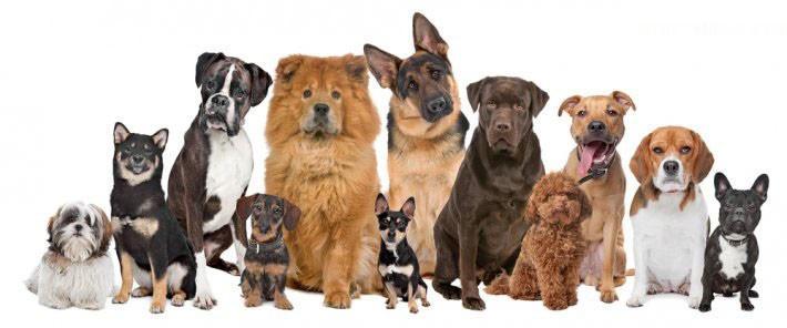 köpekler ve besin değerleri