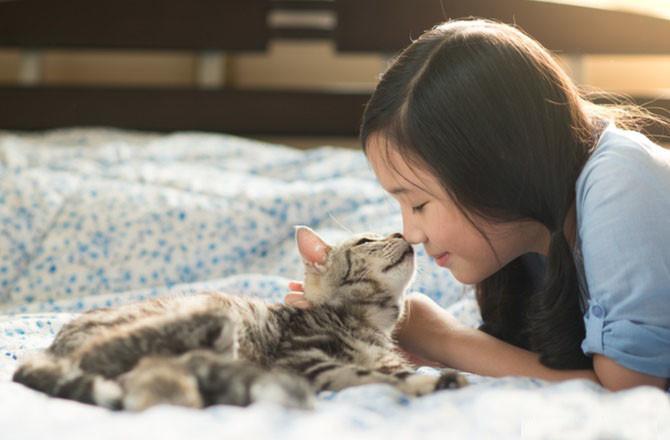 Kedi öpücüğü