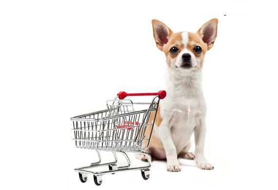 köpeğiniz için en iyi yiyecek seçimi