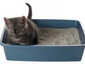 kedi tuvalet kutusu