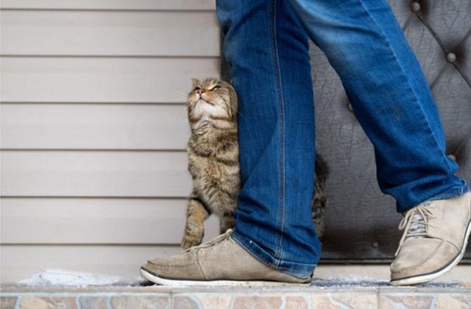 kedi kuyruğu