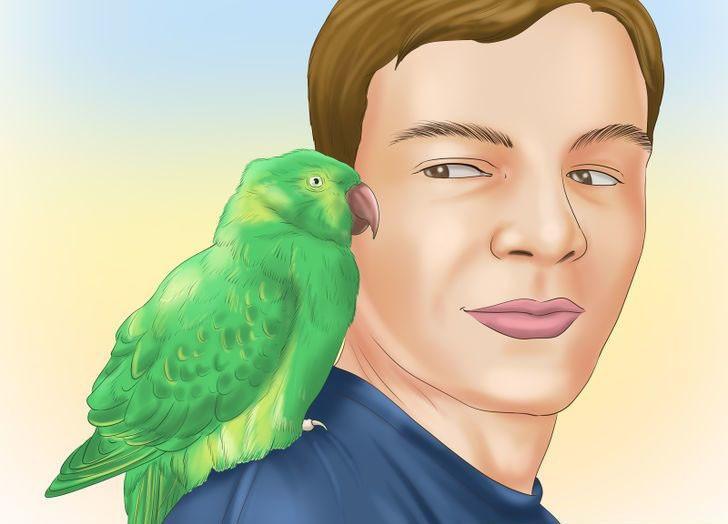 papağanın konuşması