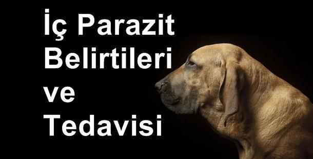 Köpek parazit belirtileri nelerdir