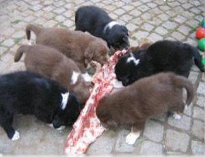 köpekler et yermi