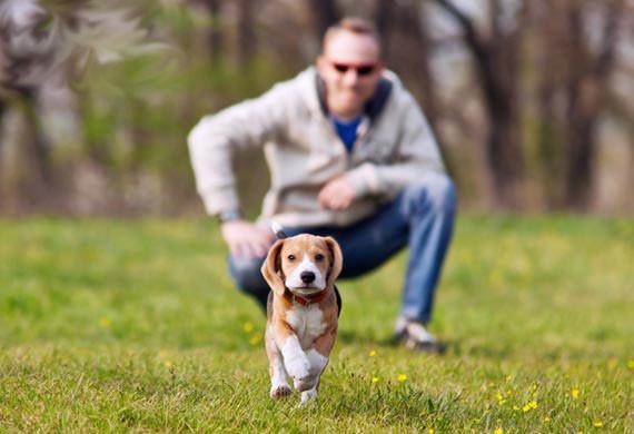 köpek besin kaynakları