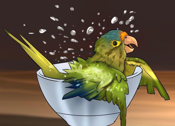 kuşunuzun banyo yapmasını sağlayın