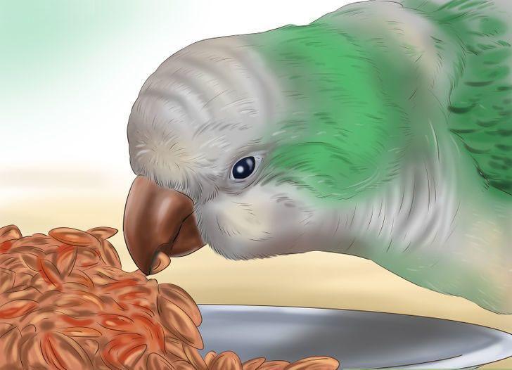 papağan yemesi hakkında