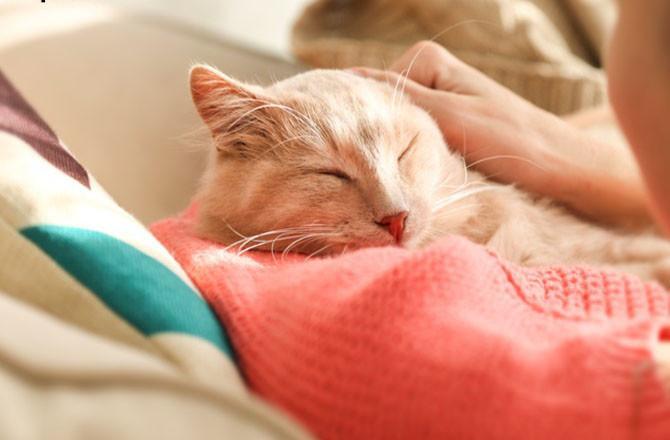kedilerin sizle uyuması