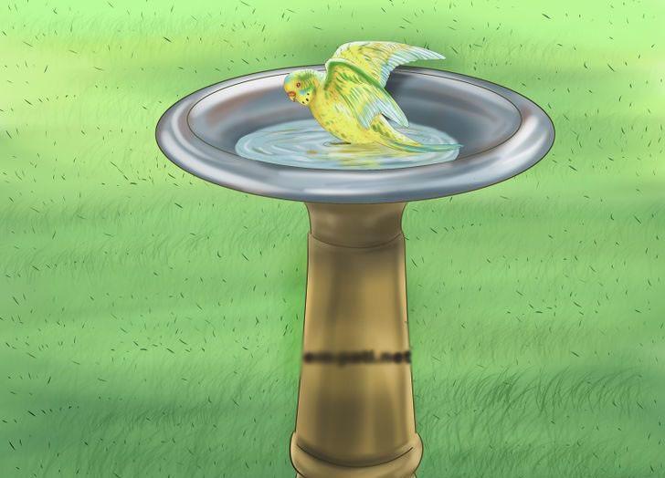 Papağan banyosu