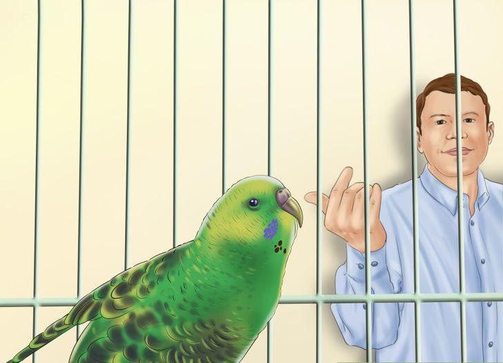 papağanı alıştırın