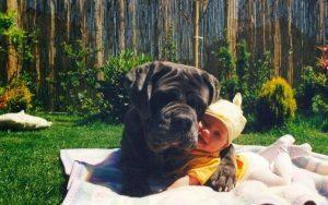 Köpeğiniz ile aranızda ki bağı yükseltin