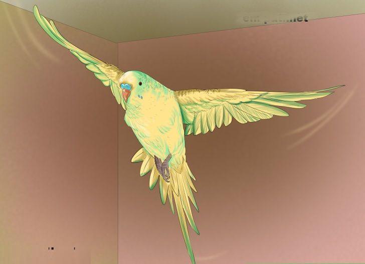 muhabbet kuşu uçurma
