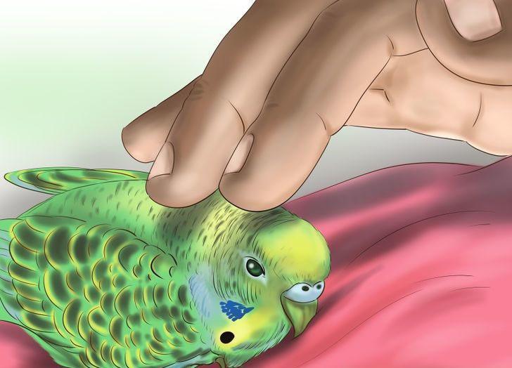 papağanı sevin