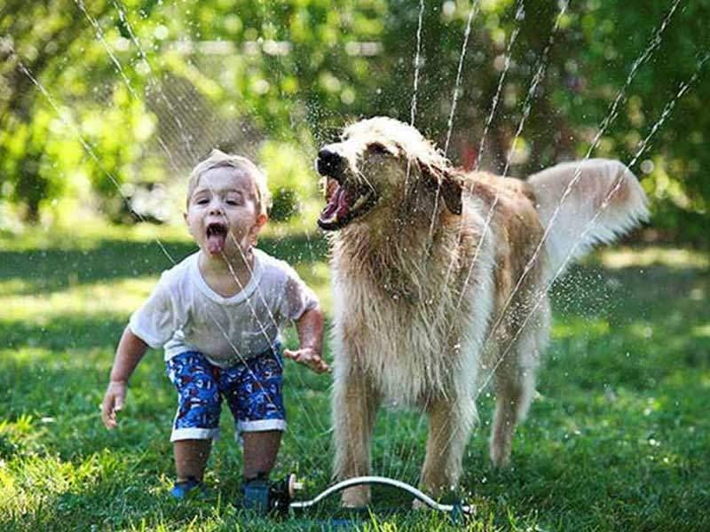 köpeğiniz ile eğlenin