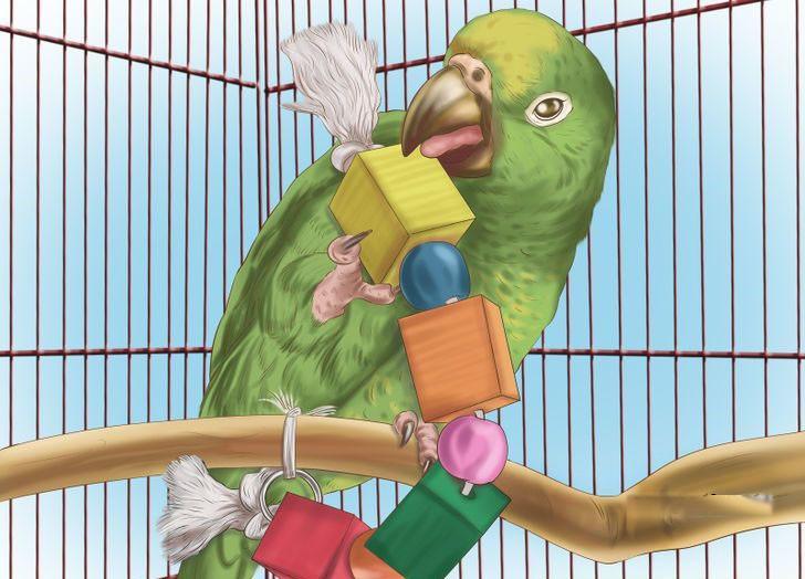 Papağan oyuncakları