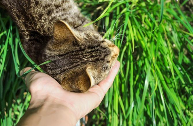 kedi kokuları