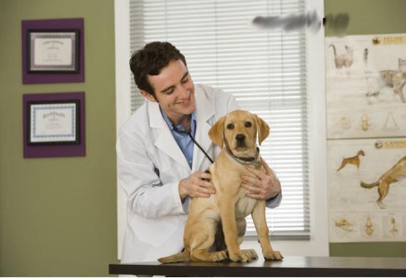 Köpeğinizin sağlıklı olduğundan emin olun