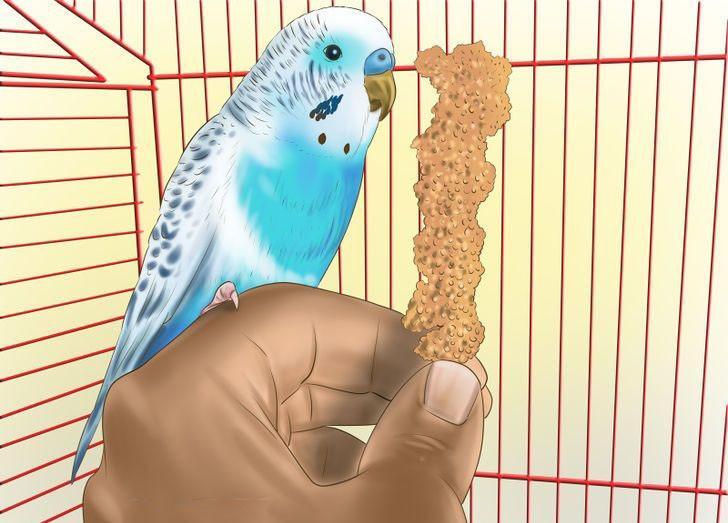 papağan alıştırma
