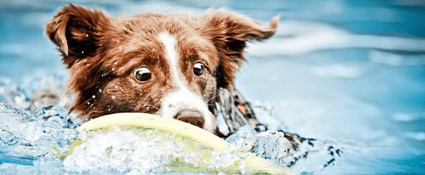 Köpeğe yüzmeyi öğretmek