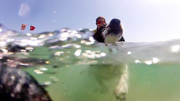 Köpeğiniz ile beraber yüzmek