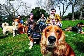 Köpeğinizi sosyalleştirme