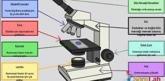 Mikroskop Nasıl Kullanılır?